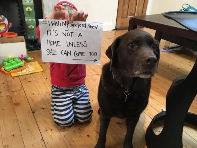 Photo of young toddler seated next to labrador dog.